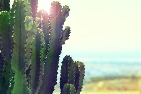 In Love With Humanity: Plastic Gemaakt Van Cactus