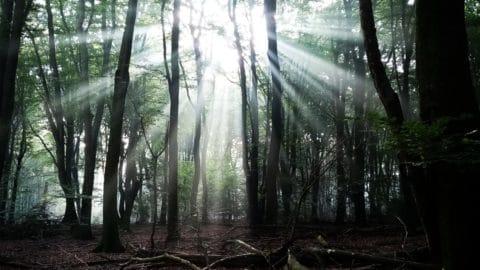 Vanochtend in 't bos, pure magie ✨
